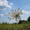Pripoved o travniških rožah in vesolju